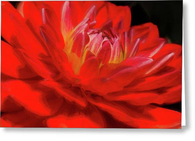 Dahlia Study 6 Painterly Greeting Card
