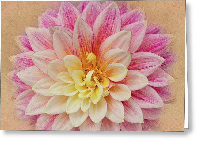 Greeting Card featuring the photograph Dahlia With Golden Background by Mary Jo Allen