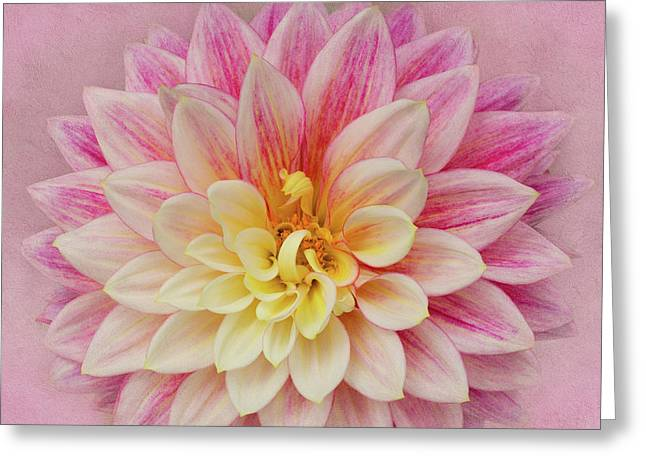 Greeting Card featuring the photograph Dahlia With Pink Texture by Mary Jo Allen