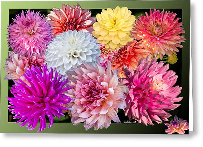 Greeting Card featuring the photograph Dahlias Of The Yukon by Claudia Abbott