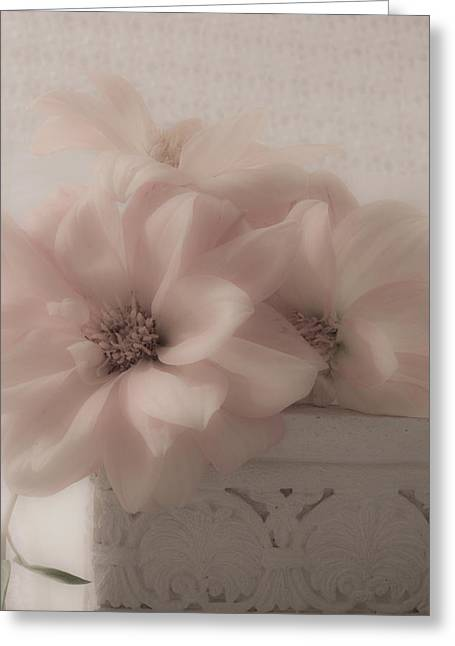Dahlias Oh So Soft Greeting Card