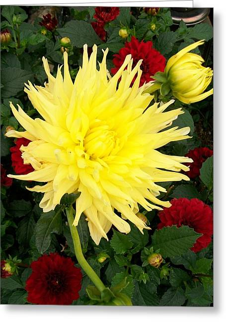 Dahlia's Greeting Card by Sharon Duguay