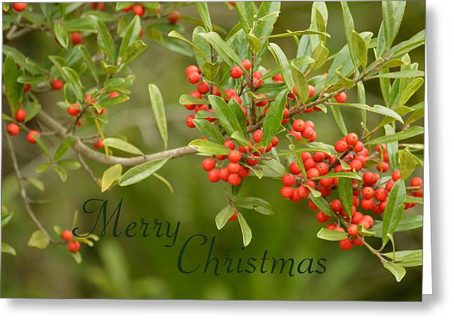 Dahoon Holly Christmas Card Greeting Card