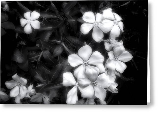 Greeting Card featuring the photograph Dainty Blooms - Black And White Photograph by Ann Powell