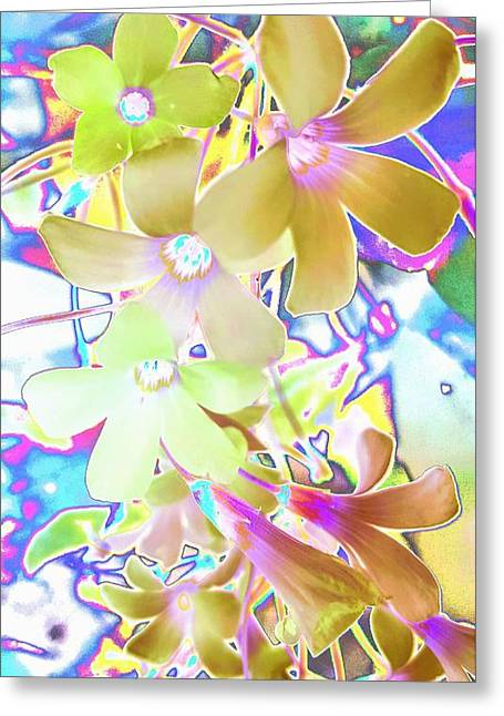 Dainty Bloosoms Greeting Card