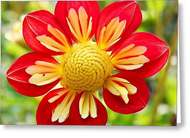 Dainty Dahlia Greeting Card