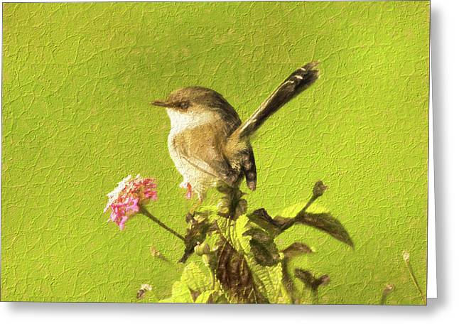 Dainty Fairy-wren Greeting Card by Genevieve Vallee