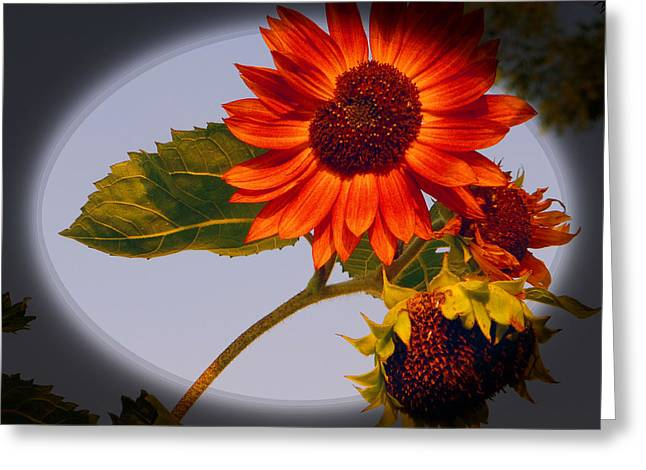 Dainty Red Sunflower Greeting Card