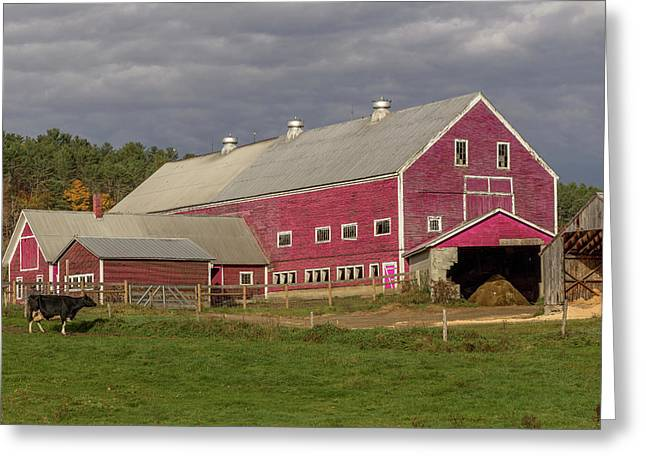 Dairy Farming Nh Greeting Card by Capt Gerry Hare