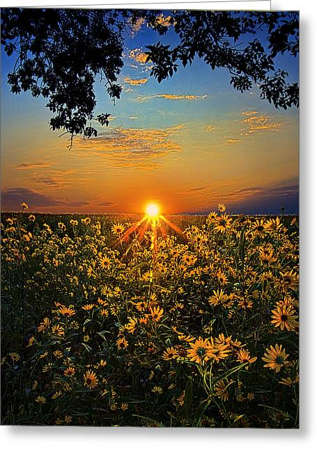 Daiseyland Greeting Card by Phil Koch