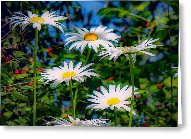 Daisies And Friends Greeting Card