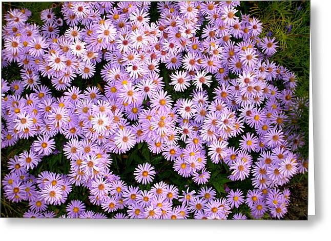 Daisies Greeting Card by Bethwyn Mills