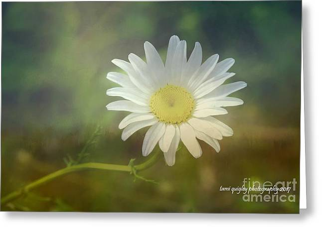Daisies Don't Tell Greeting Card