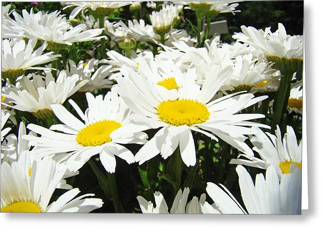 Daisies Floral Landscape Art Prints Daisy Flowers Baslee Troutman Greeting Card by Baslee Troutman