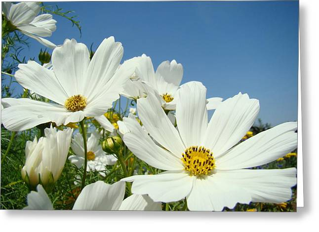 Daisies Flowers Art Prints White Daisy Flower Gardens Greeting Card by Baslee Troutman