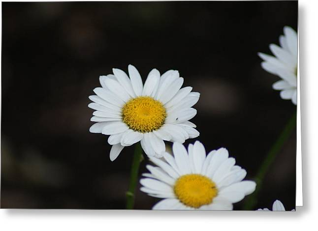 Daisies Greeting Card by Heather Green