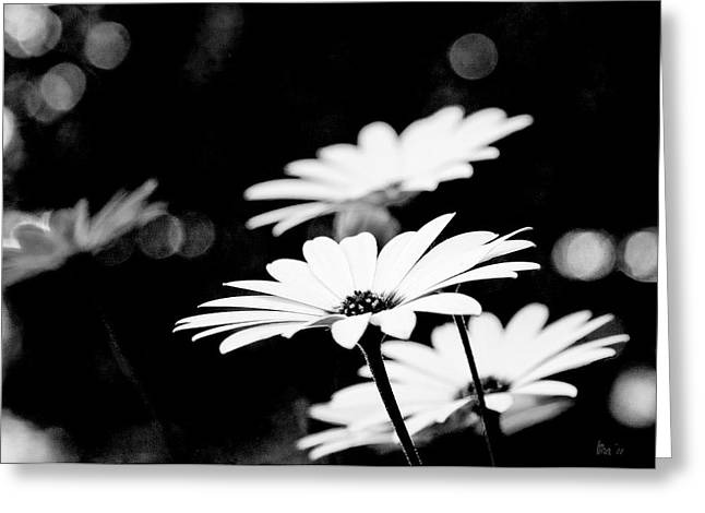 Daisies In Black And White Greeting Card