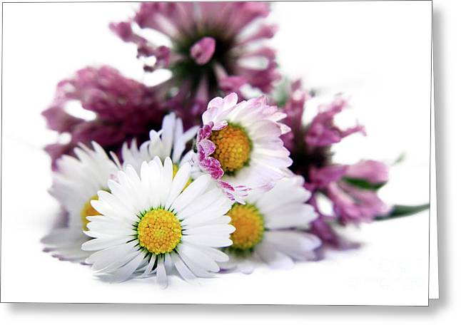 Daisies In Clover Greeting Card by Terri Waters