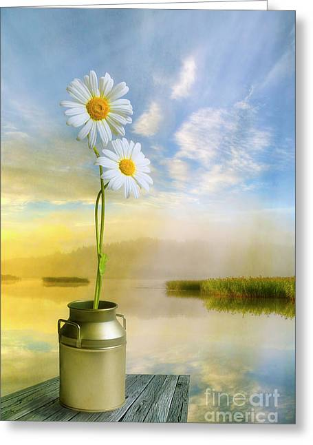 Daisies In The Summer Morning Greeting Card