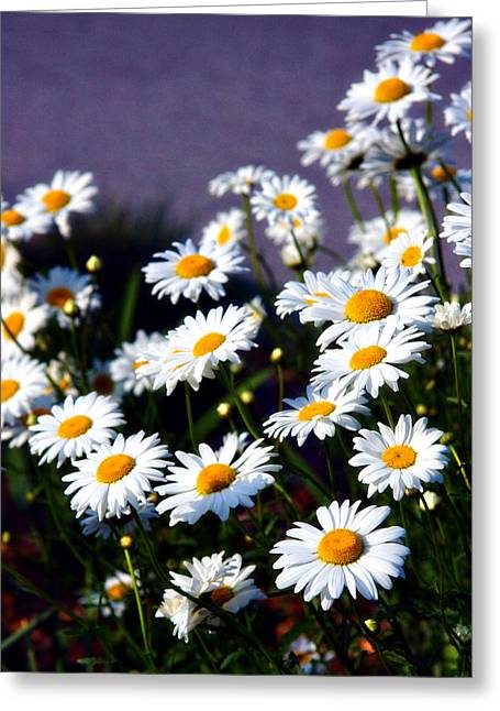 Daisies Greeting Card by Lana Trussell