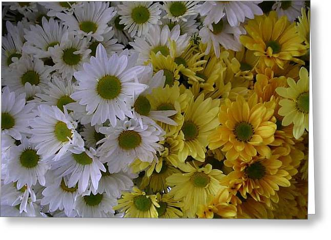 Daisies Greeting Card by Nancy Ferrier