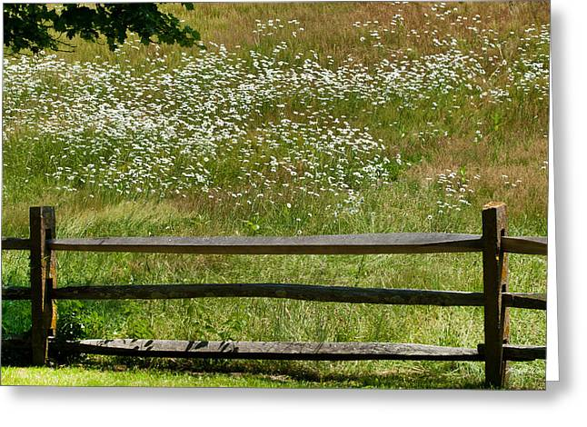 Daisies On The Vineyard Greeting Card