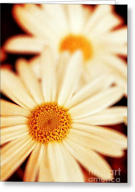 Daisies Greeting Card by Silvia Ganora