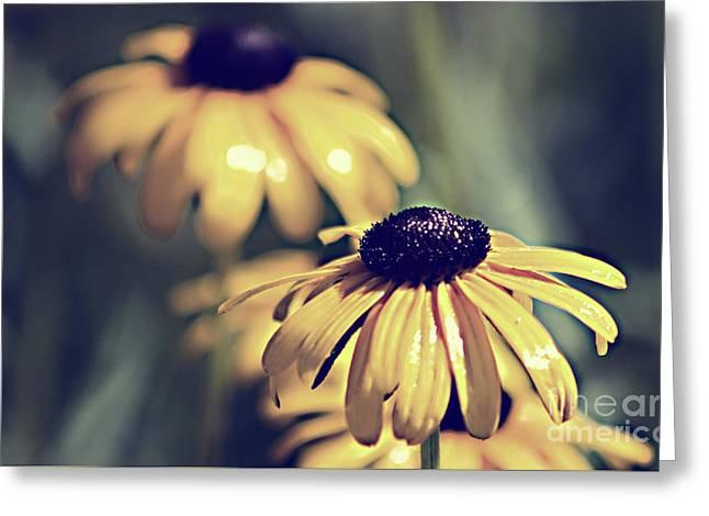Daisies Wild Flowers Greeting Card