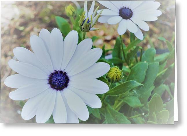 Daisy Greeting Card by Ann Johndro-Collins
