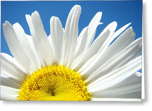 Daisy Art Prints White Daisies Flowers Blue Sky Greeting Card