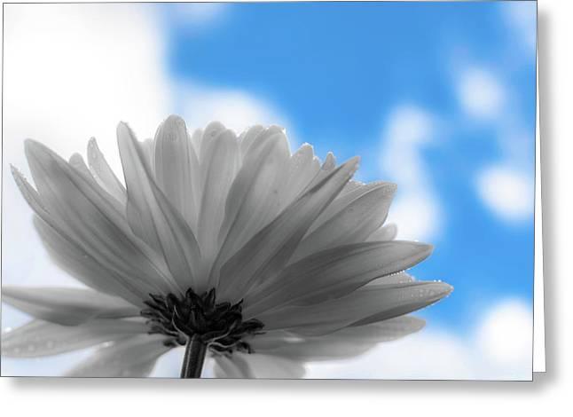 Daisy Blue Greeting Card