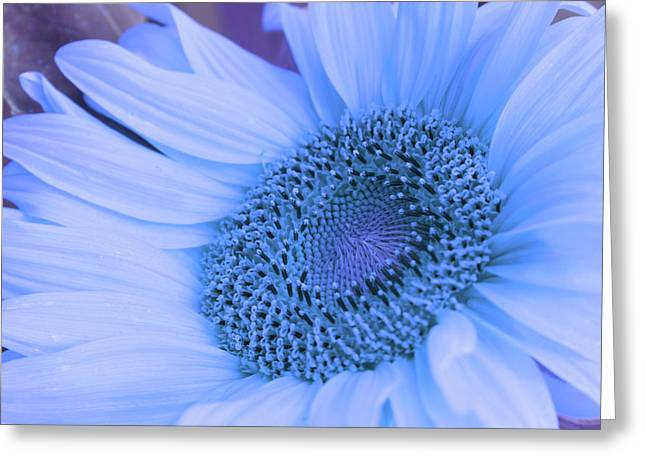 Daisy Blue Greeting Card