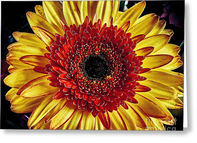 Daisy Greeting Card by Charles Muhle