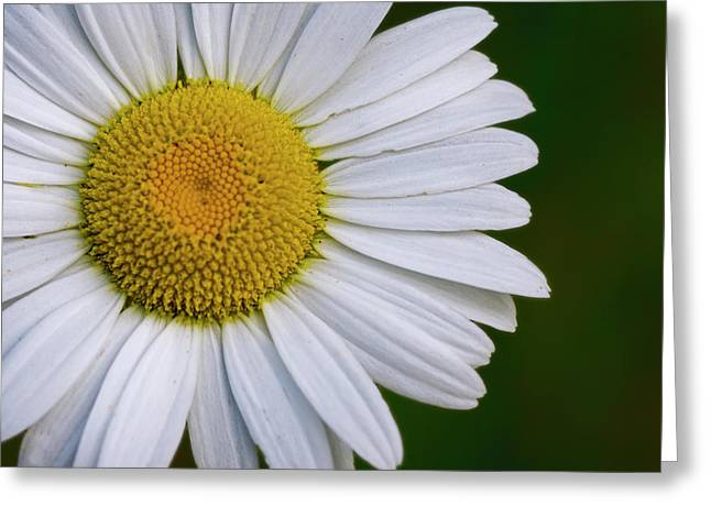 Daisy Detail Greeting Card