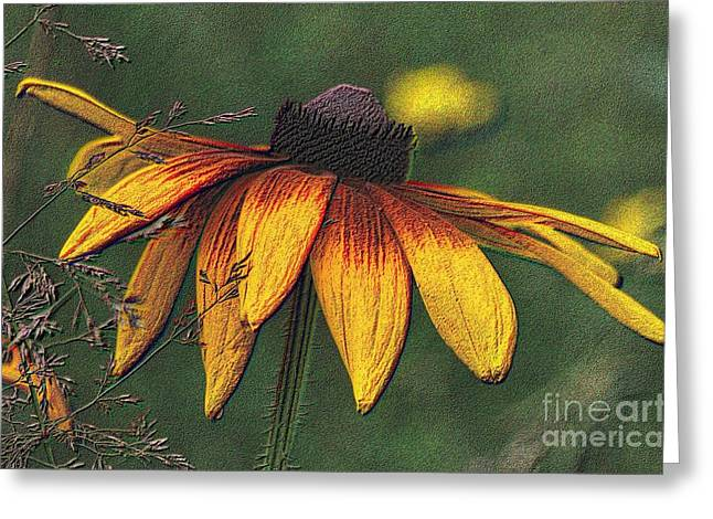 Daisy Greeting Card by Diane E Berry