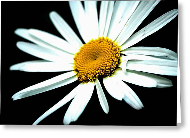 Greeting Card featuring the photograph Daisy Flower - White Sun by Alexander Senin