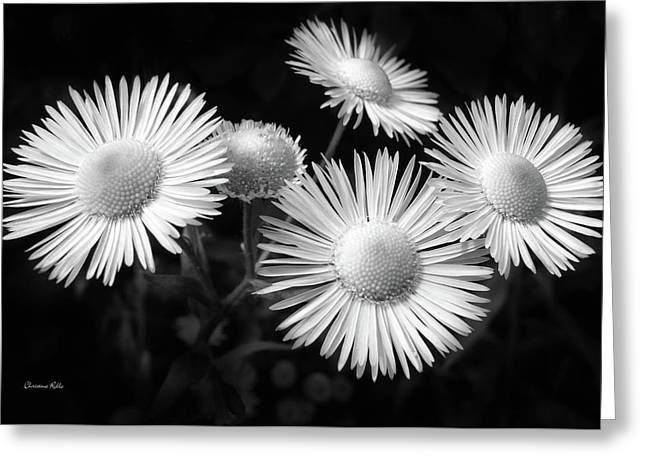 Greeting Card featuring the photograph Daisy Flowers Black And White by Christina Rollo