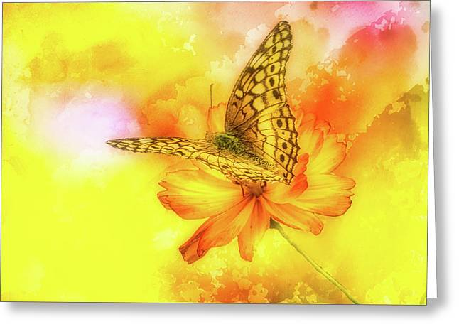 Daisy For A Butterfly Greeting Card