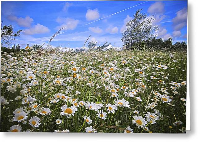 Daisy Heaven Greeting Card by Angela Aird