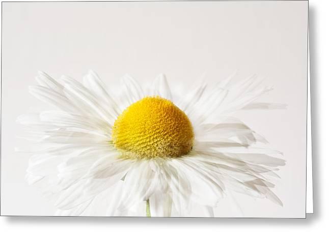 Daisy Impression Greeting Card by Janet Burdon