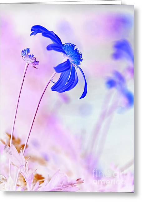 Daisy In Blue Greeting Card by Kaye Menner