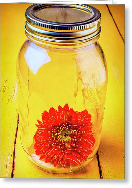 Daisy In Glass Jar Greeting Card by Garry Gay