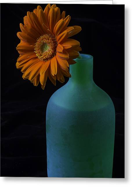 Daisy In Green Vase Greeting Card by Garry Gay