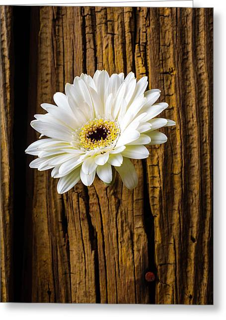 Daisy In Knothole Greeting Card by Garry Gay