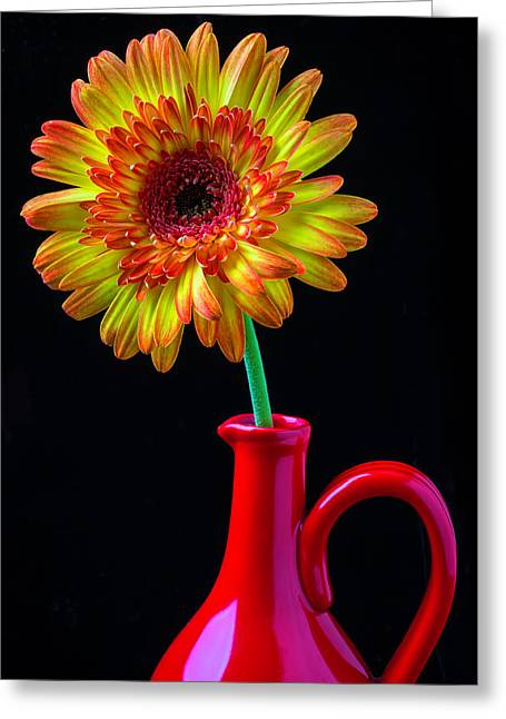 Daisy In Red Pitcher Greeting Card