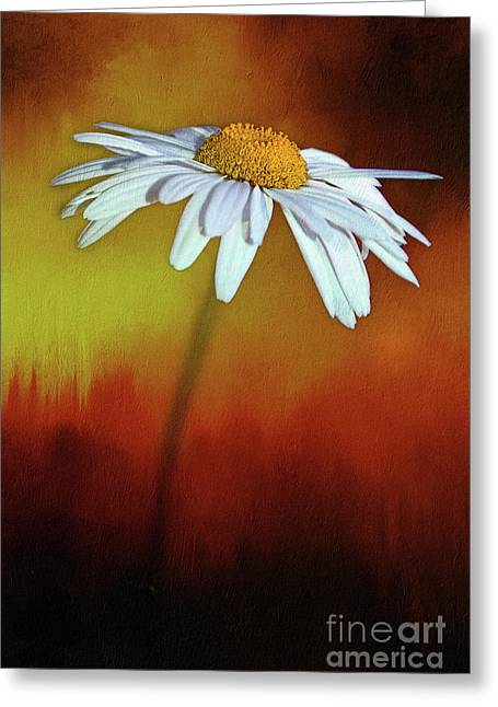 Daisy On Heat By Kaye Menner Greeting Card