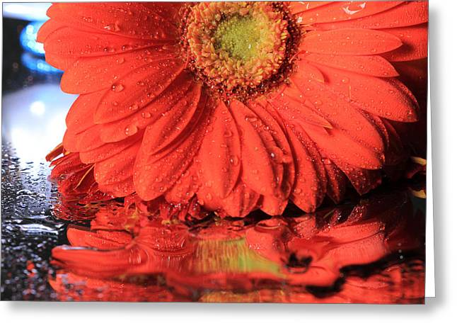 Daisy Reflections Greeting Card