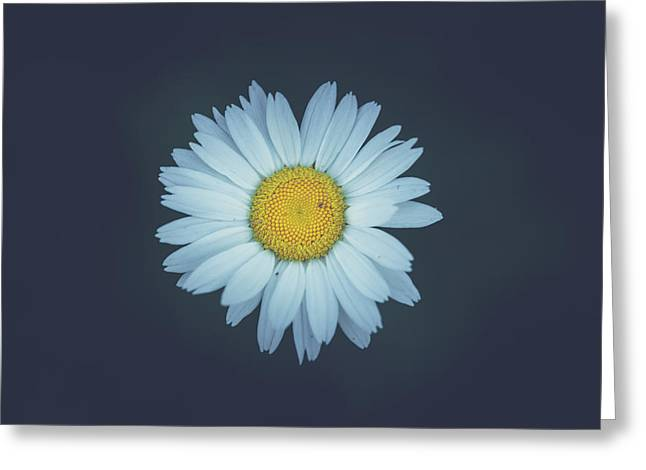 Greeting Card featuring the photograph Daisy  by Shane Holsclaw