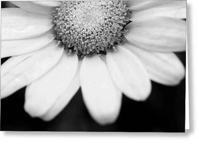 Daisy Smile - Black And White Greeting Card