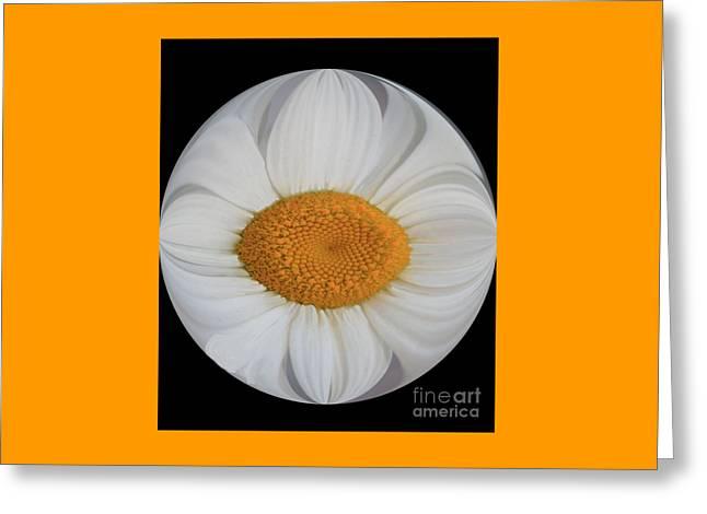 Daisy Sunny Side Up Greeting Card